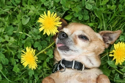dog with toxic plant