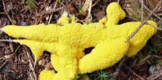 dog yellow