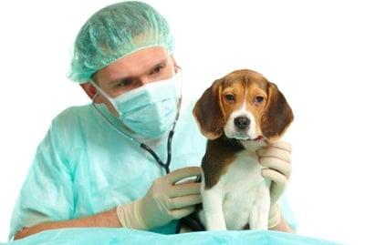 sick dog with diarrhea