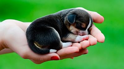 puppie in hand