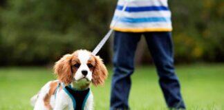 puppy walking