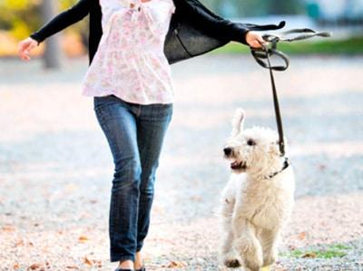 dog training on street