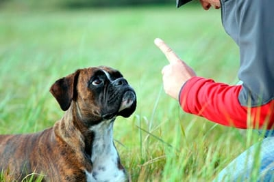 dog during training
