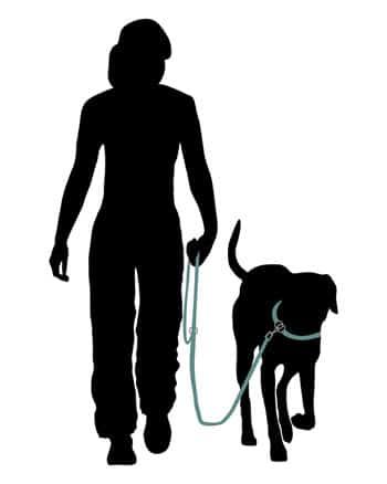 training the dog