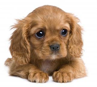 fleas on puppies