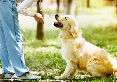 a dog training