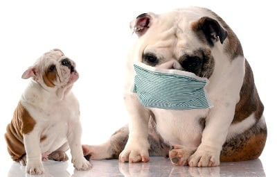 puppy and adult dog with cough