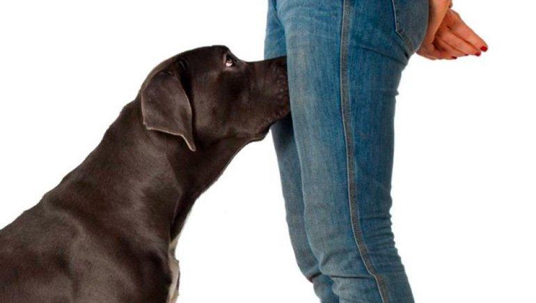 dog sniffing a crotch